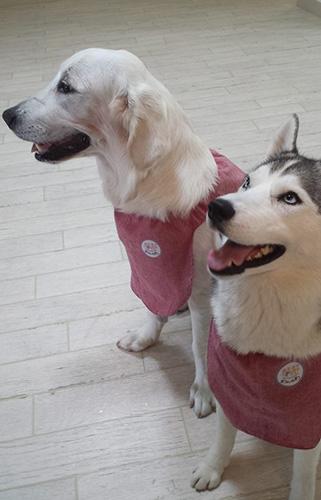 犬の保育園の園服(スモック)を作りました!