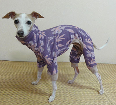 画像: 薄紫ピンク花(綿パイルニット)allin-S