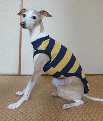 画像: 紺黄ボーダー(綿ニット)Tシャツ5号