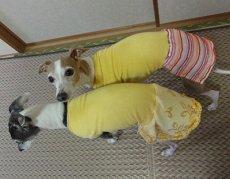画像4: 黄色×ピンクボーダー(綿ニット)スカート付きトレーナー2号 (4)