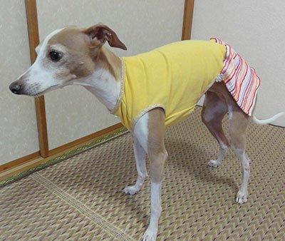 画像1: 黄色×ピンクボーダー(綿ニット)スカート付きトレーナー2号