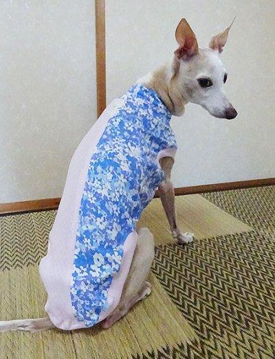 画像1: 水色花+ピンク(綿ニット)-Tシャツ5号