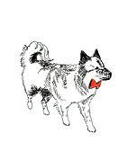 """横浜市の犬のしつけ""""Wonder Wold""""さん"""