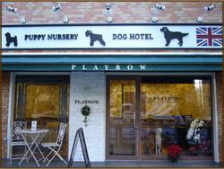 続々、スマホ最適化リニューアル「犬の保育園プレイボゥ中目黒店」