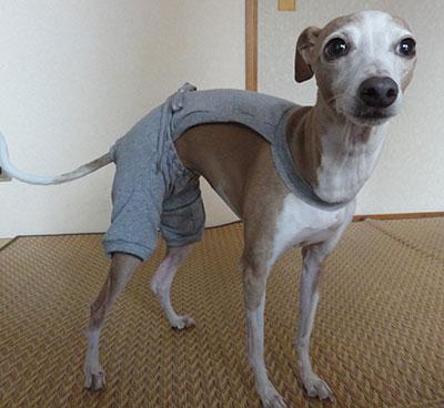 犬 避妊手術後