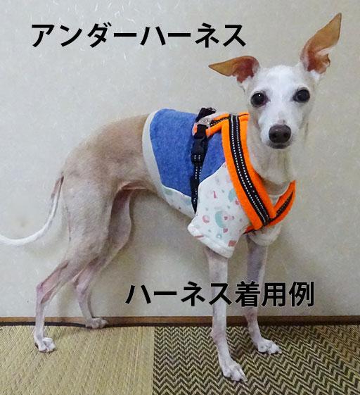 画像1: 青×アフロキャラ(裏起毛綿ニット):ショートトレーナー2号 (1)